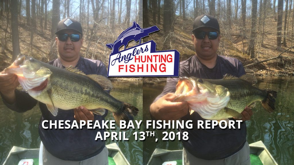 Chesapeake Bay Fishing Report - April 13th, 2018