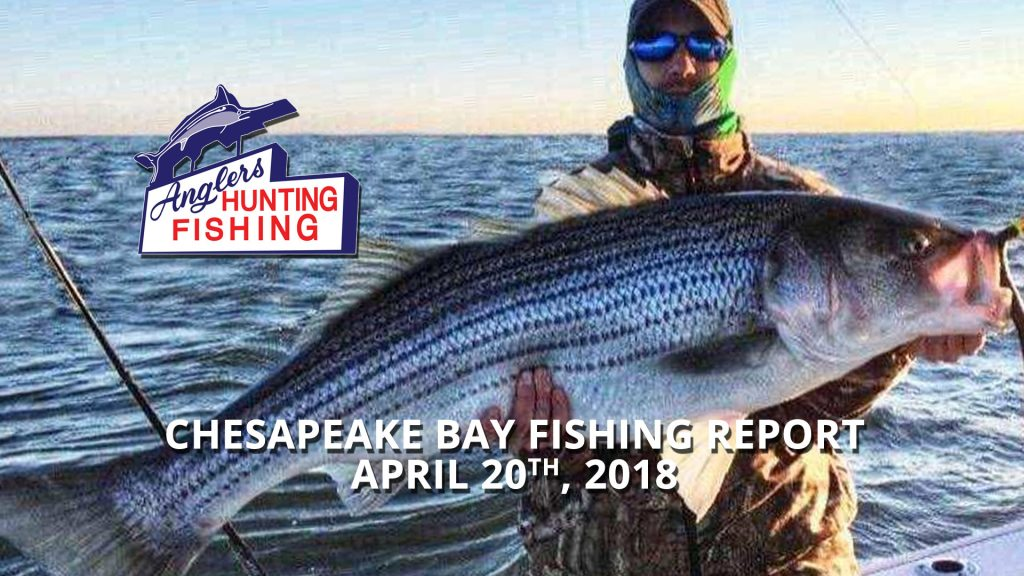 Chesapeake Bay Fishing Report - April 20th, 2018