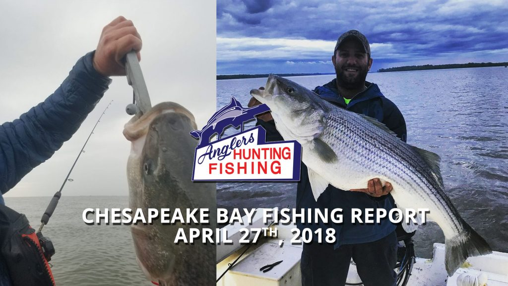 Chesapeake Bay Fishing Report - April 27th, 2018