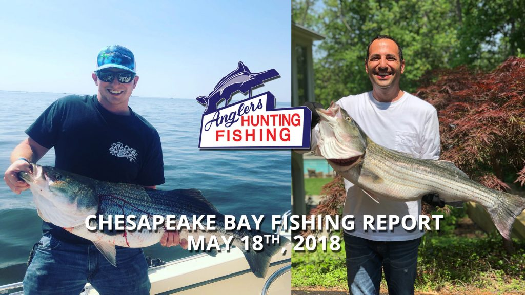 Chesapeake Bay Fishing Report - May 18th, 2018