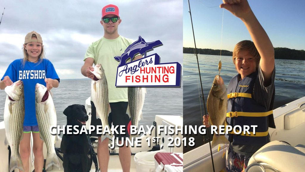 Chesapeake Bay Fishing Report - June 1st, 2018