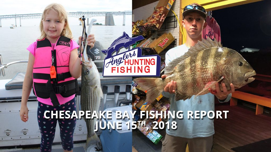 Chesapeake Bay Fishing Report - June 15th, 2018