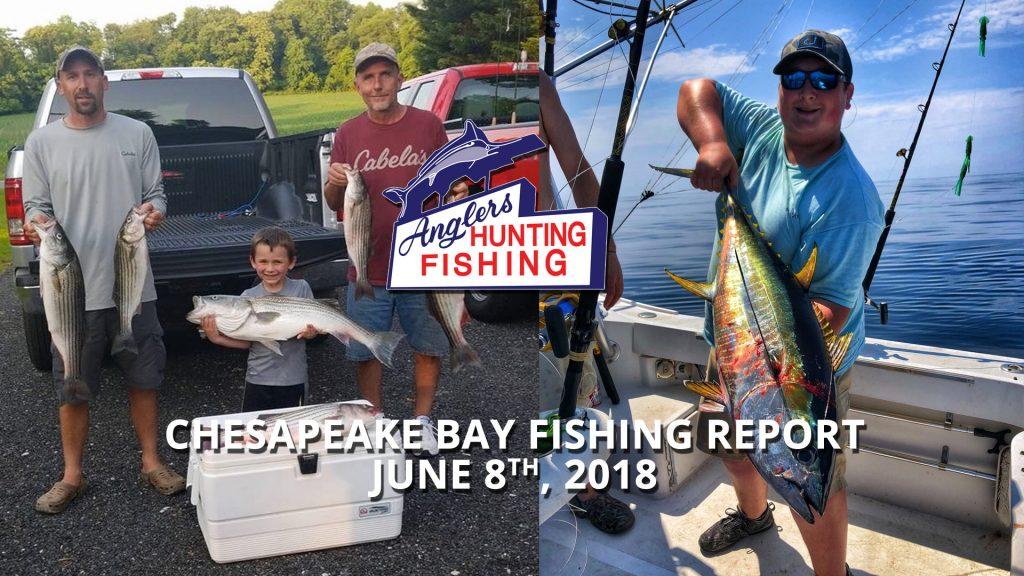 Chesapeake Bay Fishing Report - June 8th, 2018