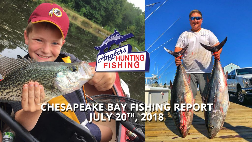Chesapeake Bay Fishing Report - July 20th, 2018
