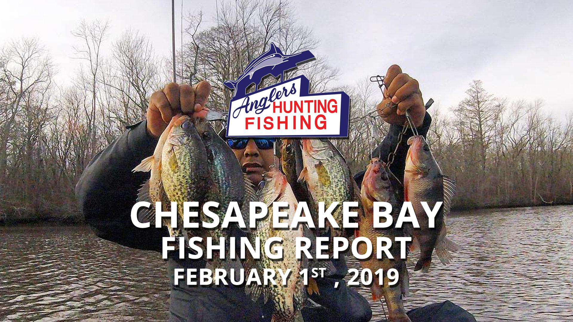 Chesapeake Bay Fishing Report - February 1st, 2019