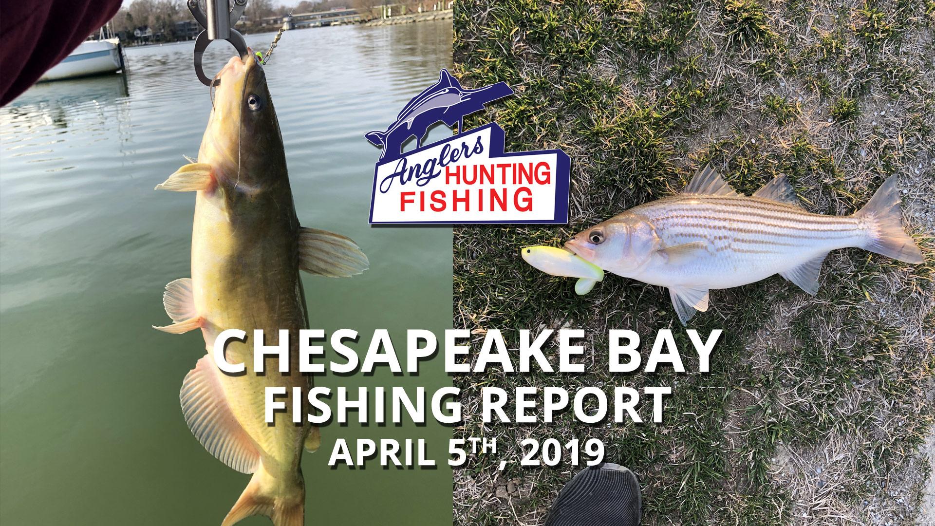 Chesapeake Bay Fishing Report - April 5th, 2019