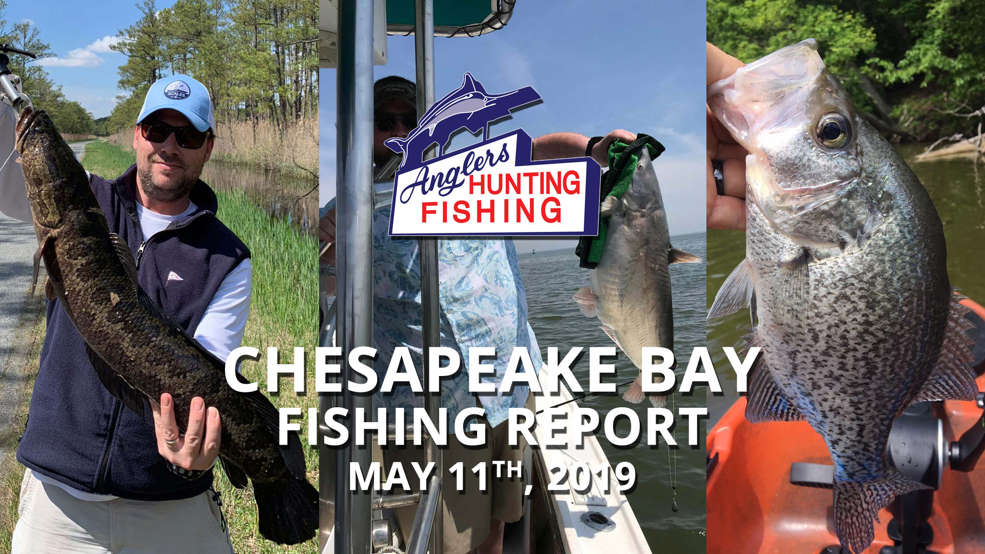 Chesapeake Bay Fishing Report - May 11th, 2019