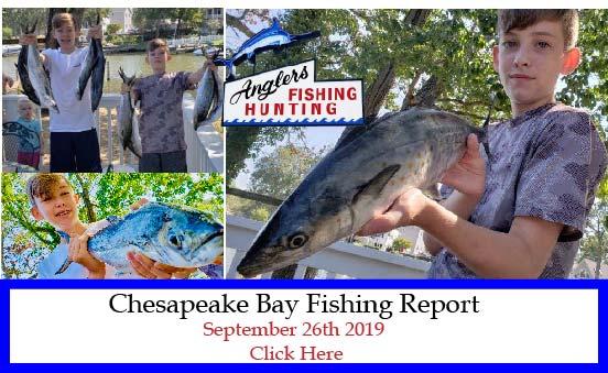 Chesapeake Bay Fishing Report-September 26th 2019