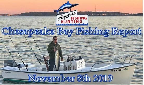 Chesapeake Bay Fishing Report: November 8th 2019